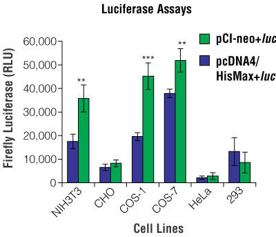 Relative levels of luciferase expression for pCI-neo+luc and pcDNA4/HisMax+luc in different cell lines.