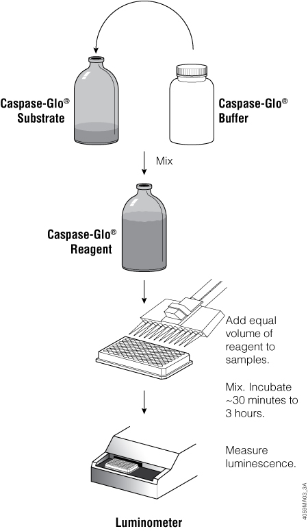 Overview of the Caspase-Glo 3/7 Assay protocol.
