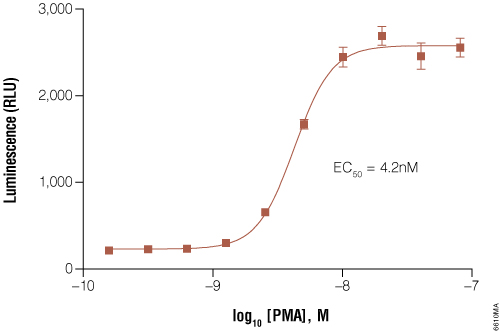 GloResponse NFAT-RE-luc2P HEK293 cells response to PMA titration.