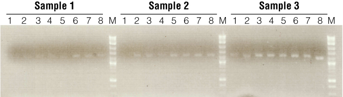 Annealing temperature gradient reactions performed for three Pogona skin samples.
