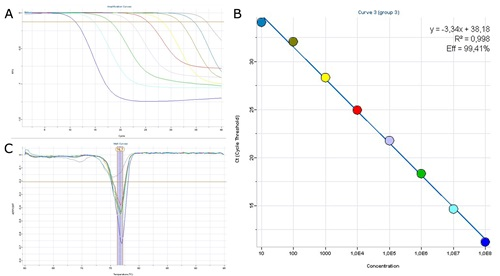 Real-time PCR analysis of PCV2 DNA.