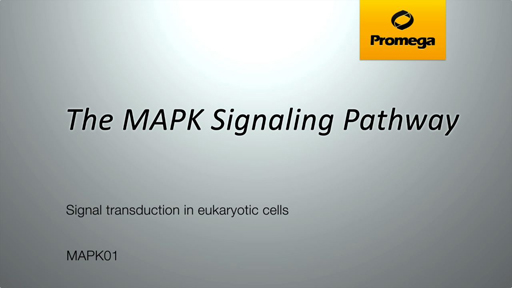 Introduction to the MAPK Pathway